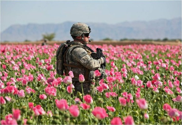 Afghanistan Opium Poppies Hit Record High Despite $7 Billion US Campaign