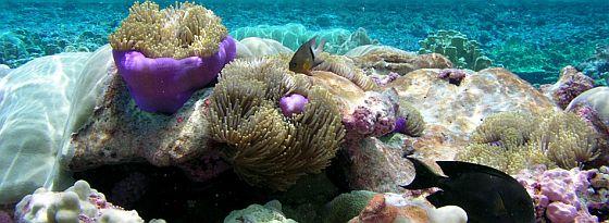 tidepools-pacific-remote-islands